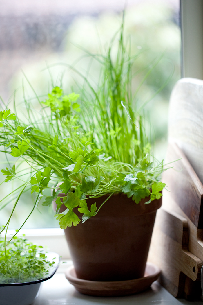 Fresh herbs in my kitchen :: Sonja Dahlgren/Dagmar's Kitchen