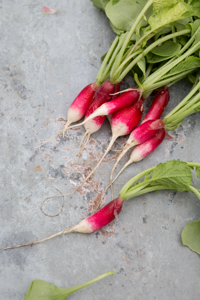 French breakfast radishes :: Sonja Dahlgren/Dagmar's Kitchen
